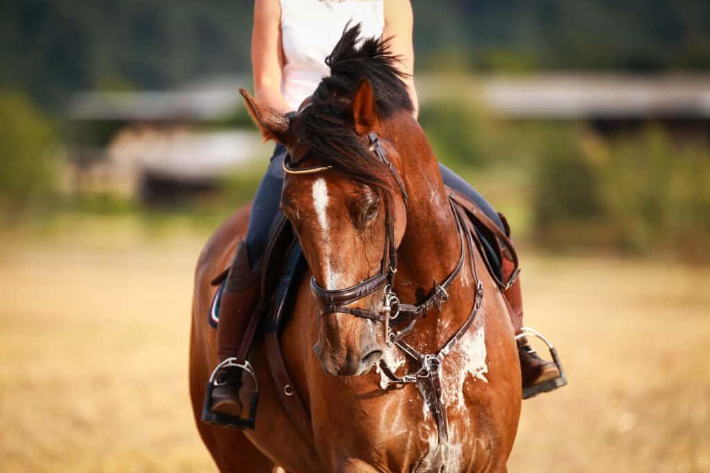 horse sweating