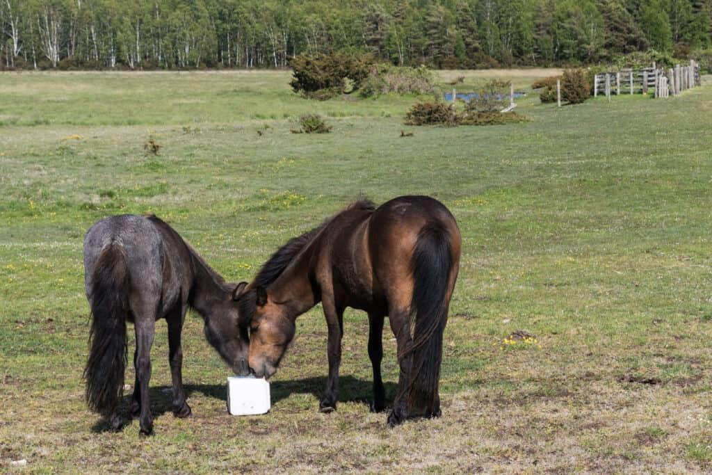 why horses need salt