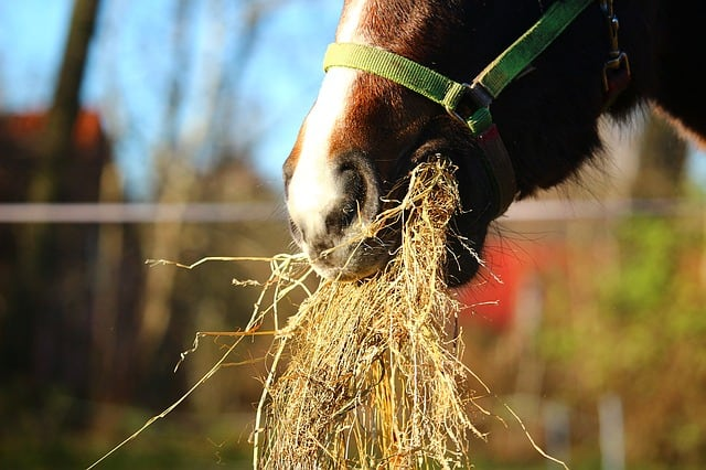 signs a horse is stressed