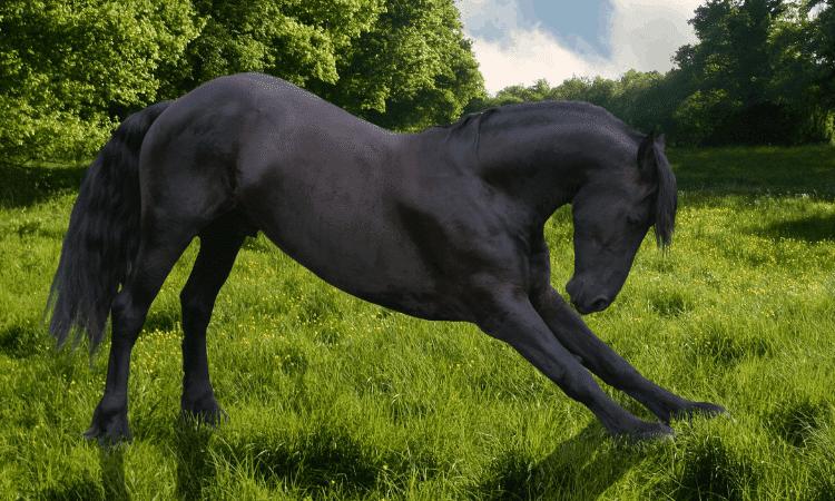 teach your horse how to bow
