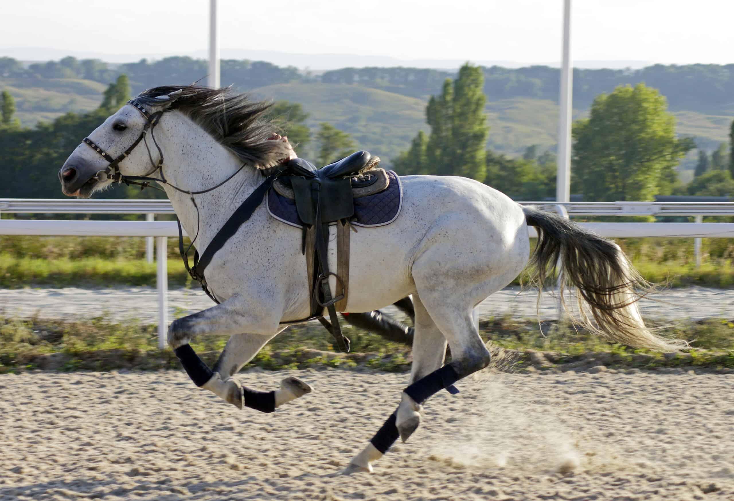 do horses like to be ridden?