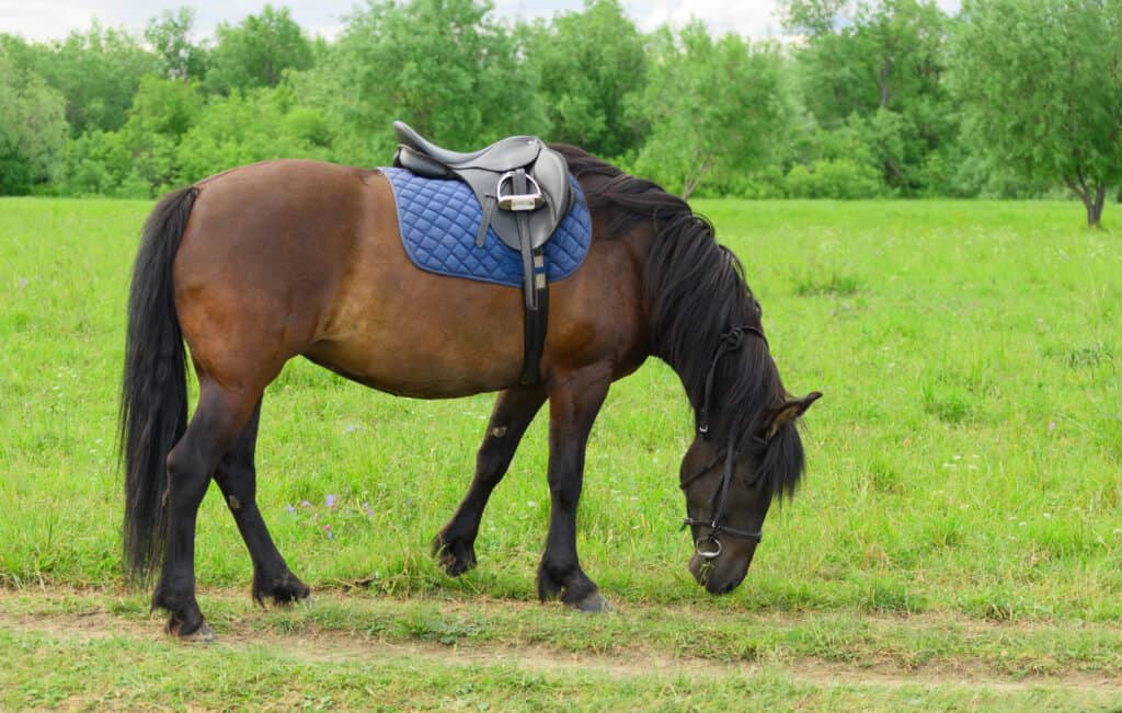 signs your horse's tack isn't working properly