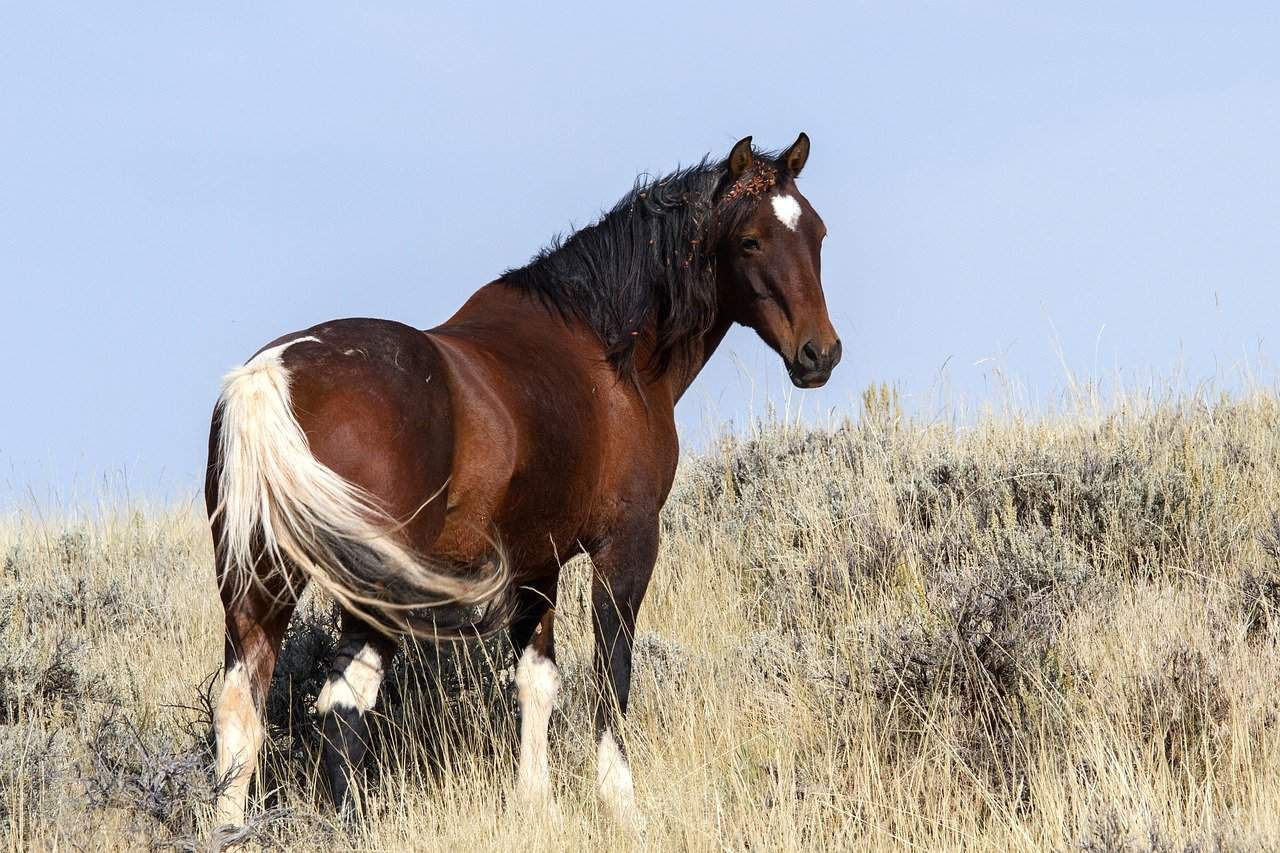 viewing wild horses