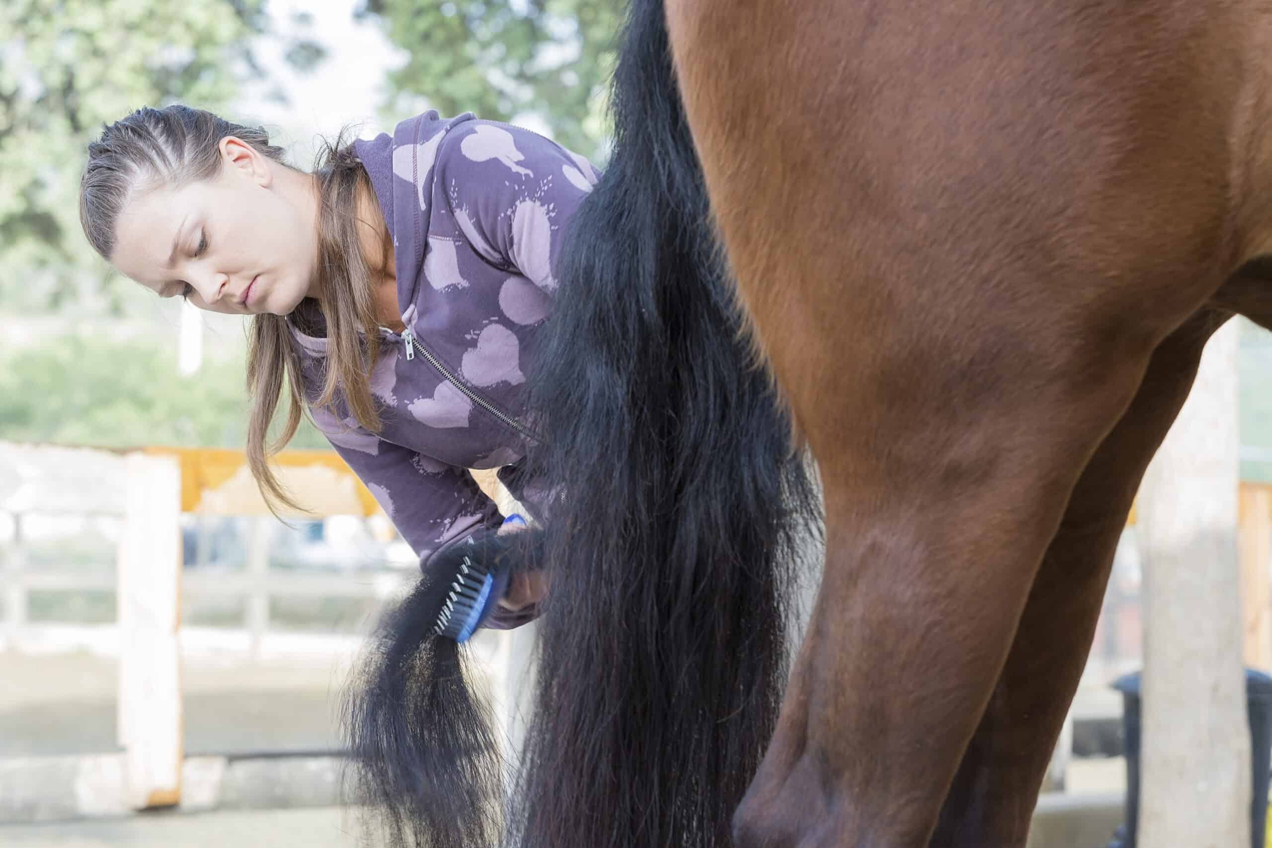 grooming your horse