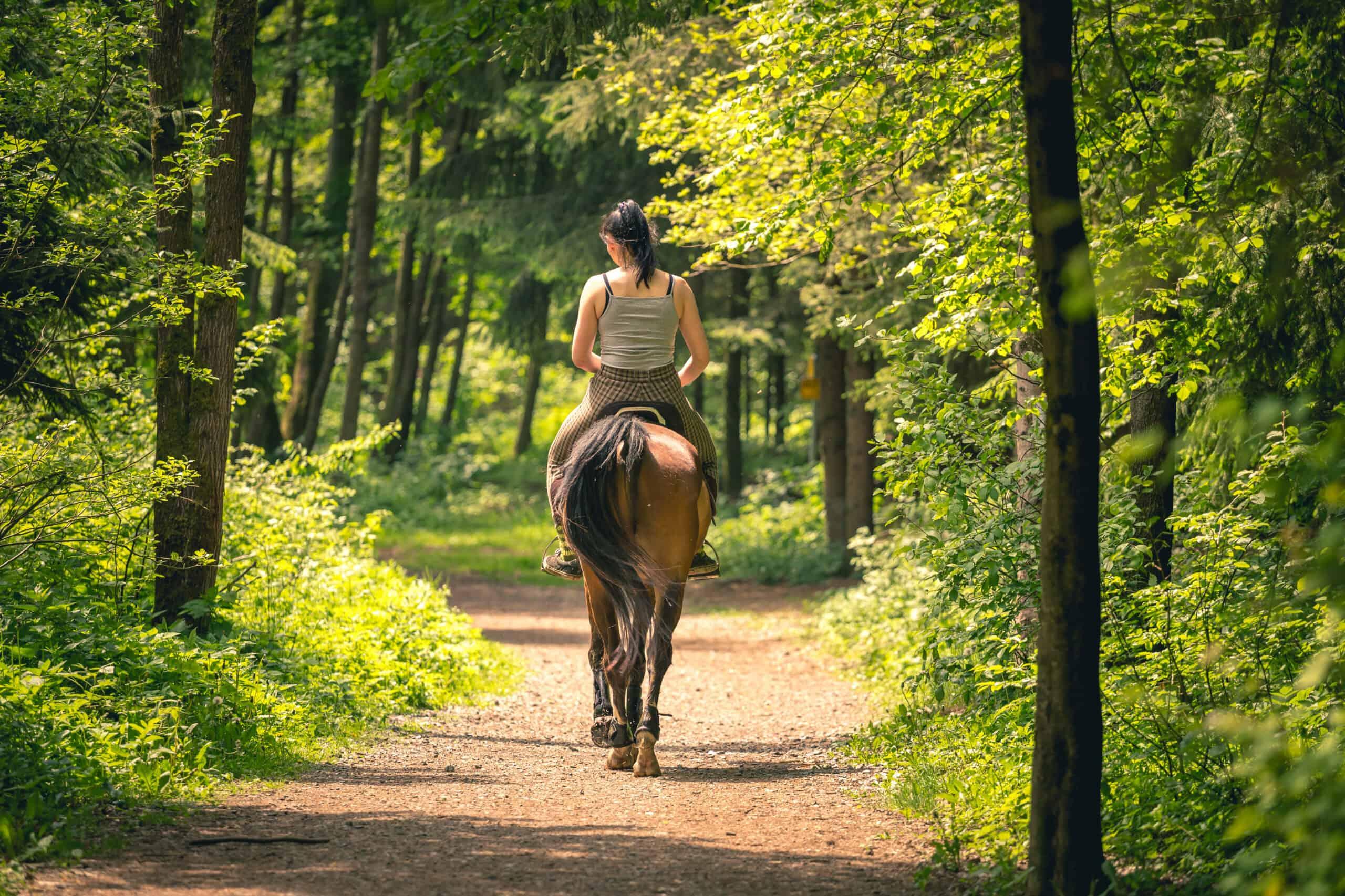 do horses like to be ridden