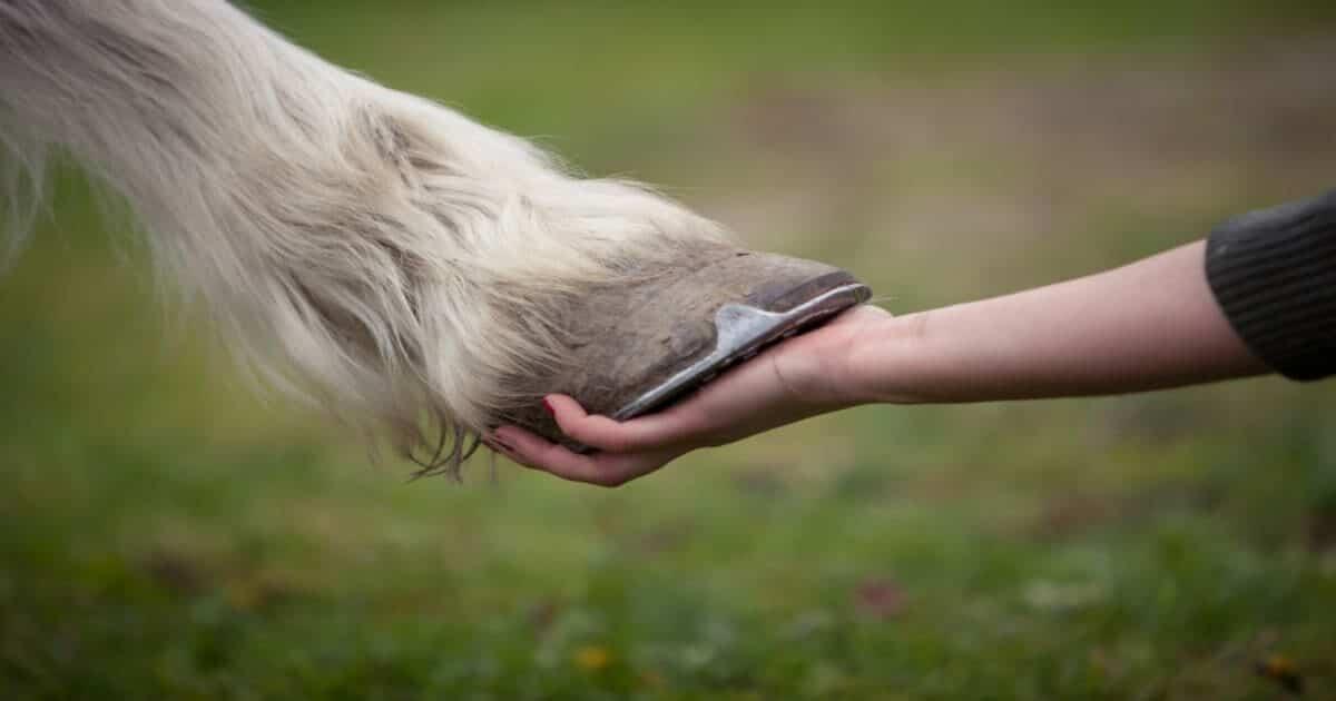 Horses Understand Intention