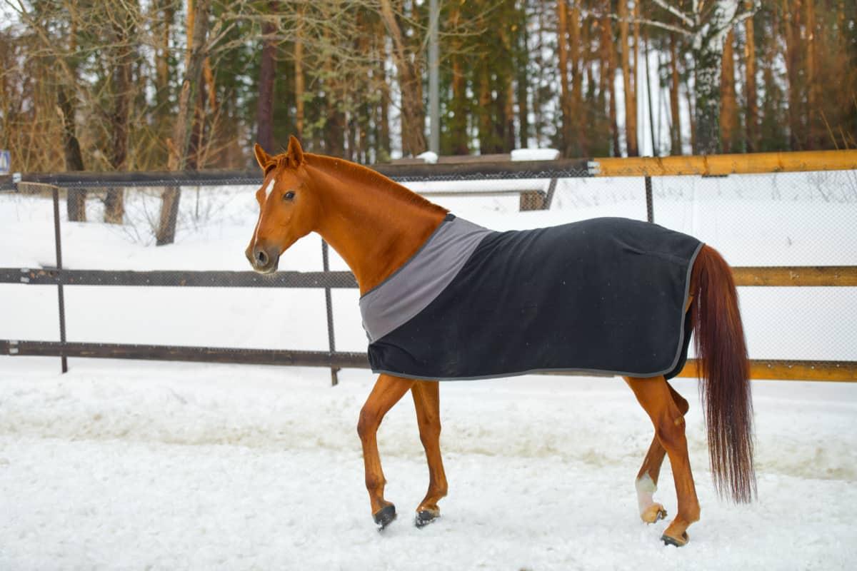 Horse Blanketing Tips