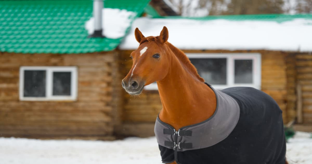 Should Horses Use Blankets