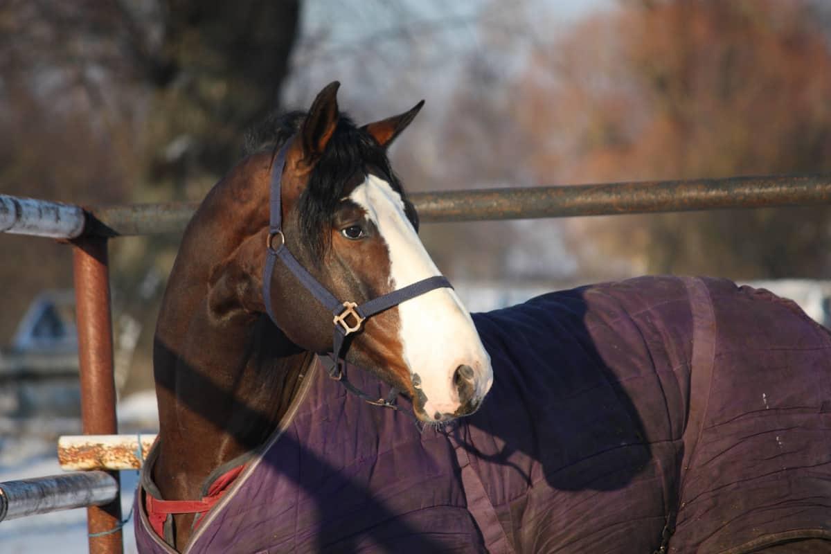 Horse Blanket Study