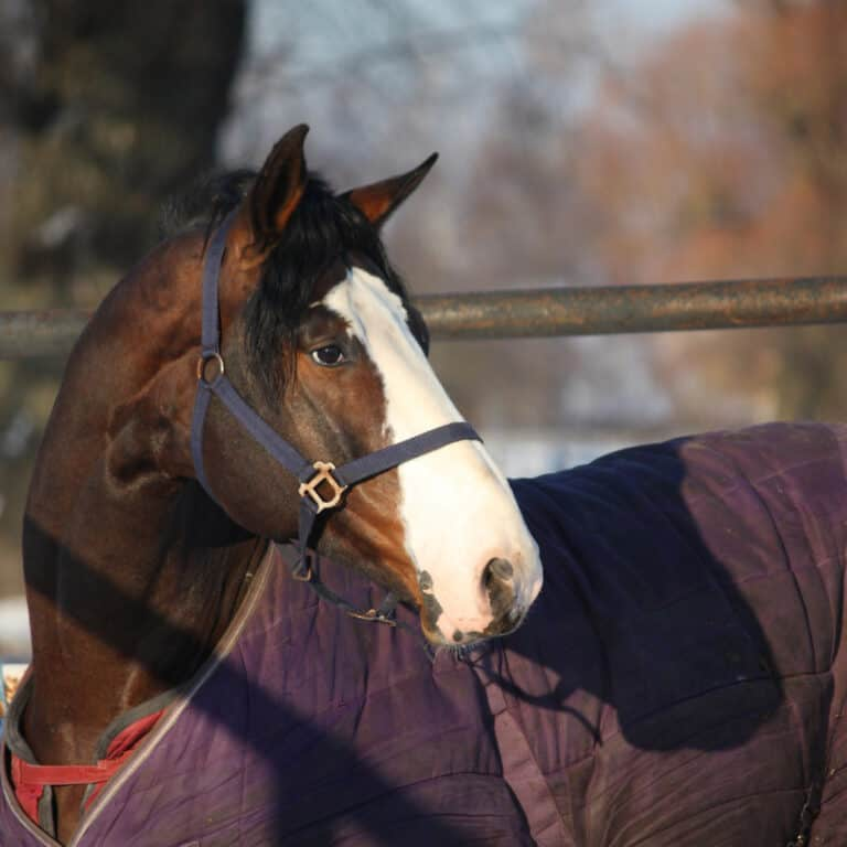 Horse Blanket Benefits