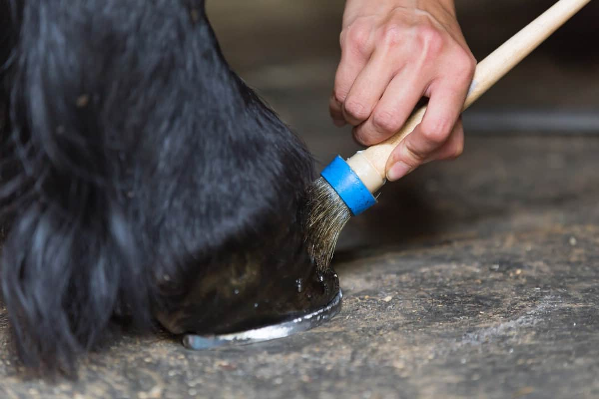 Hoof conditioner winter horse caring hack.