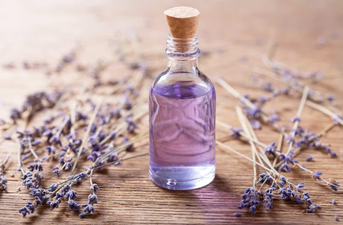Lavender oil uses in the barn.