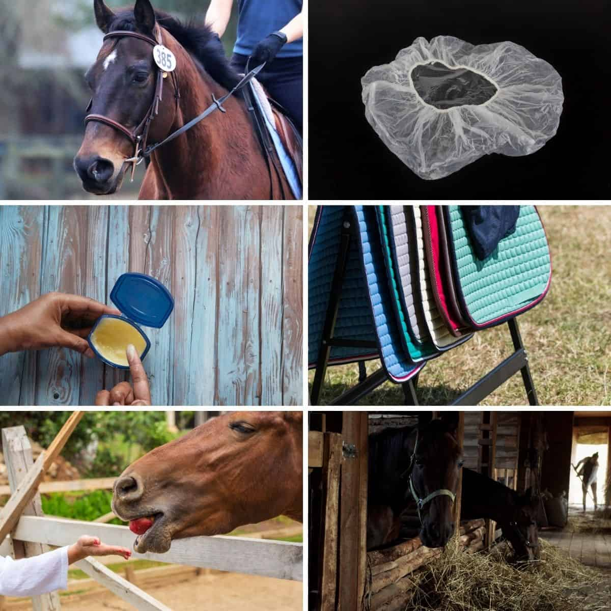 Collage photo featuring some of the horse caring tips from the post.