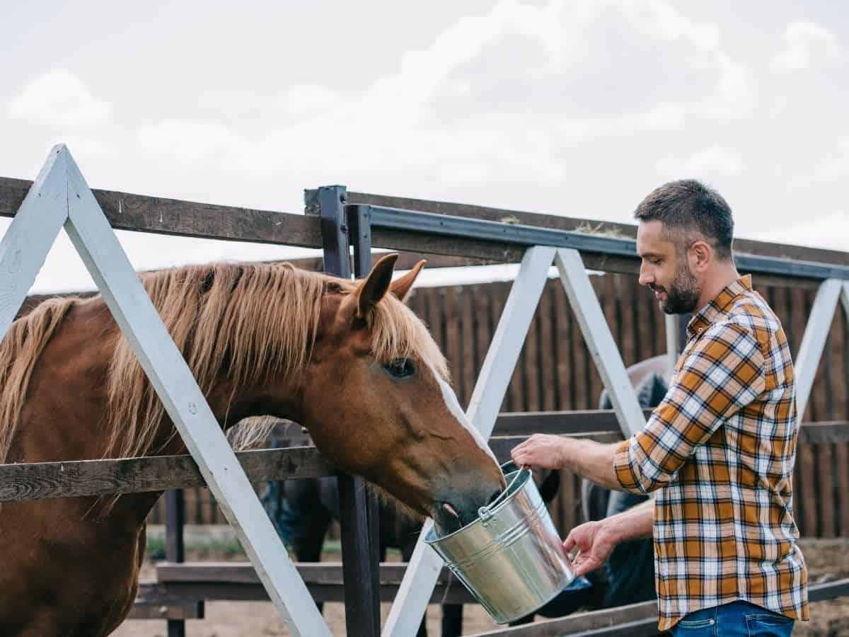 Man feeding horse