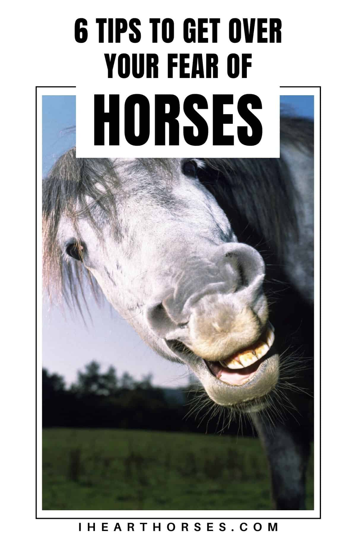 Silly horse face