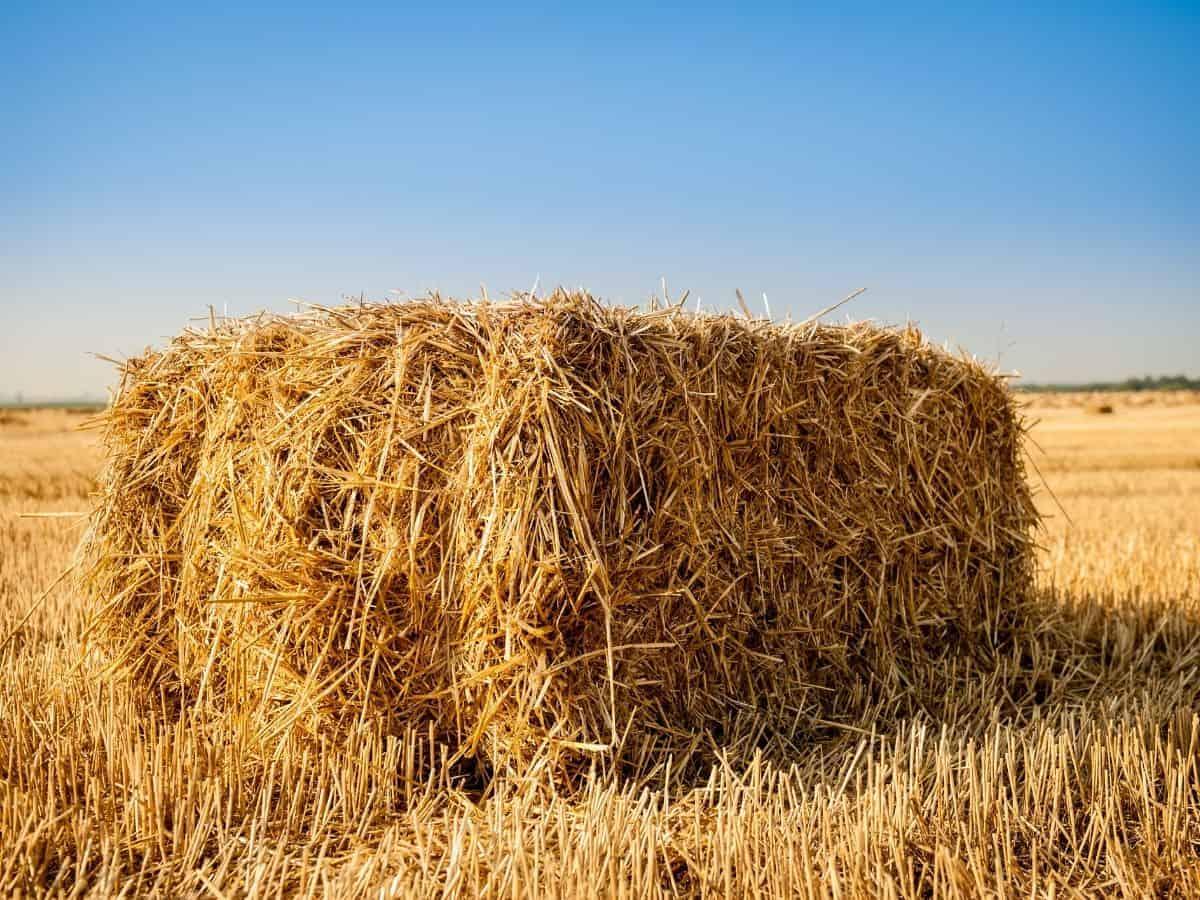 Bale of hay in field