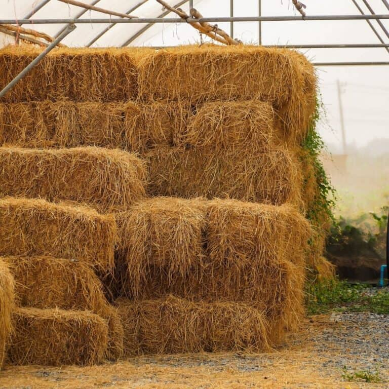 Hay in greenhouse