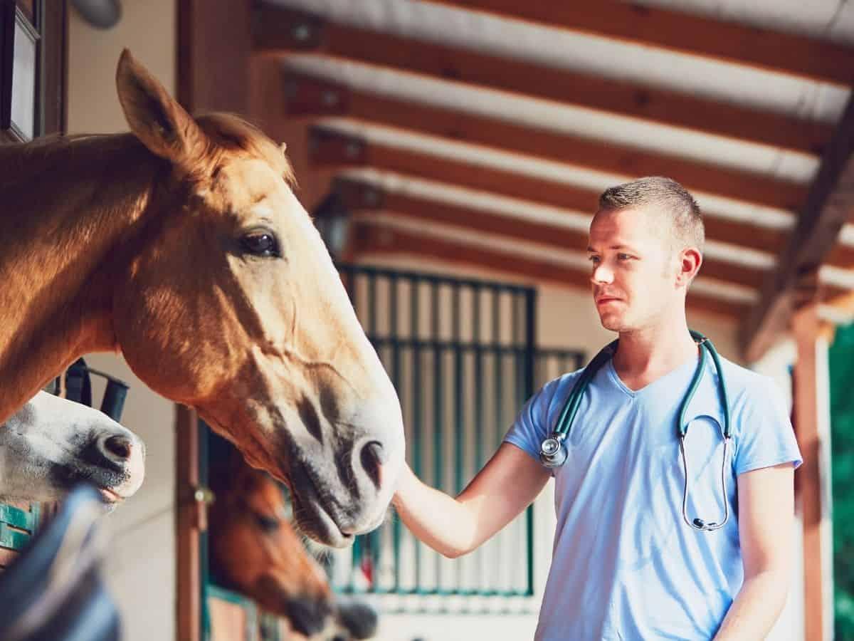 Man touching horse