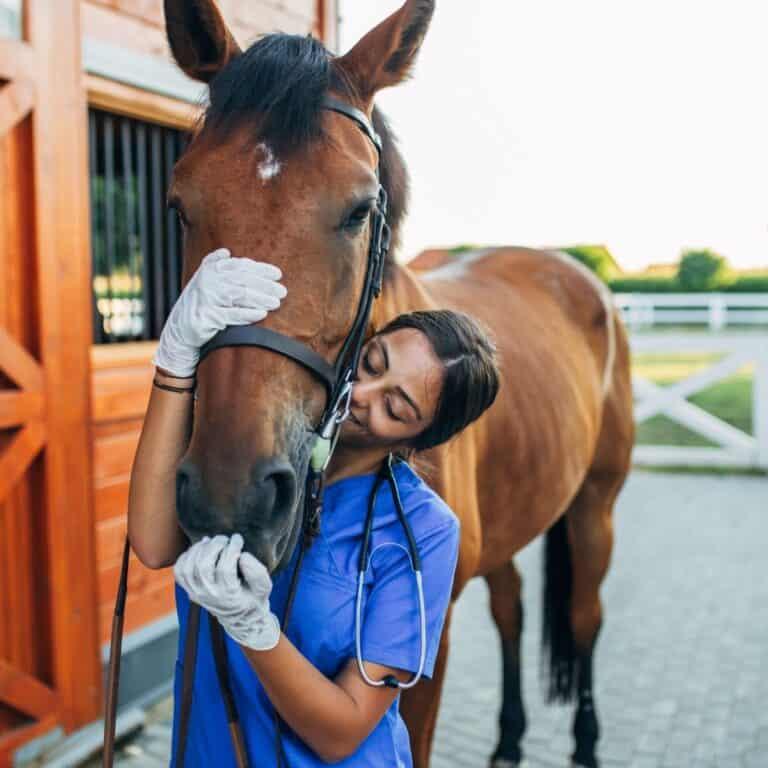 Vet hugging horse