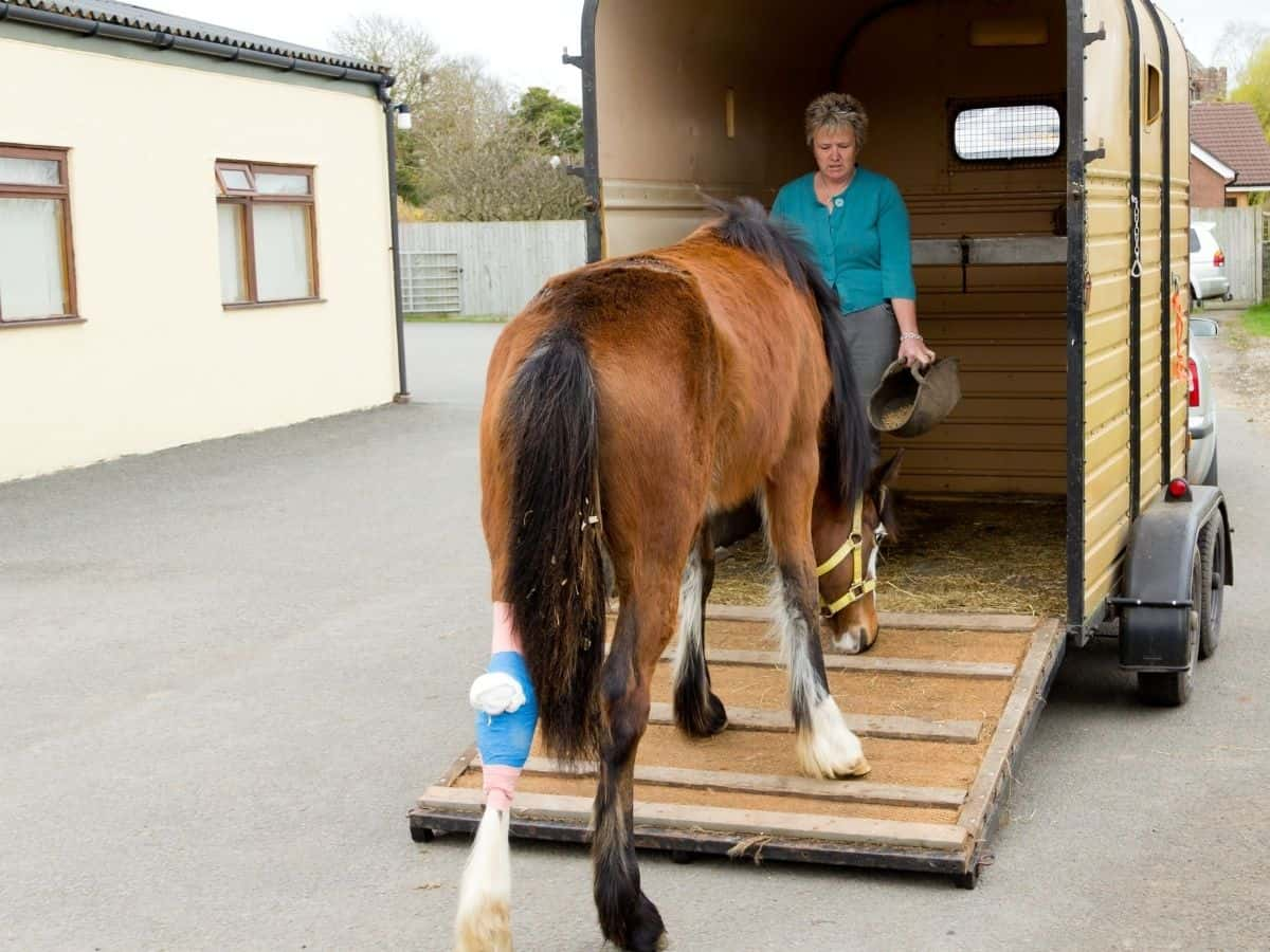 Woman leading horse into trailer