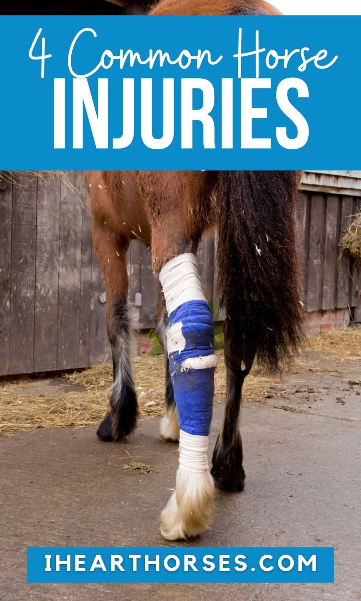 Brown horse with leg wrapped in blue bandage