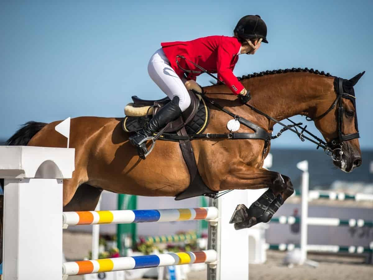 Rider in red and white jumping bars
