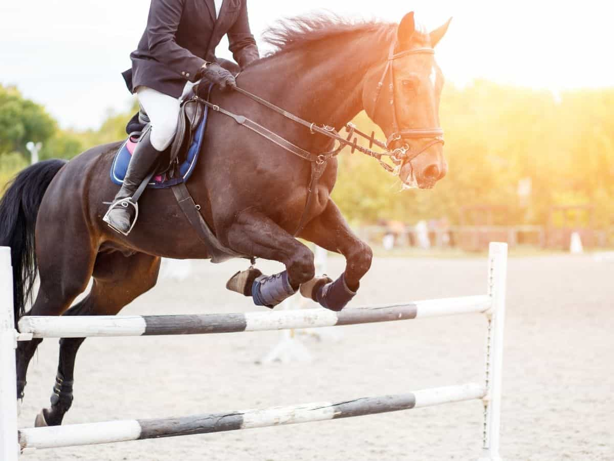 Brown horse jumping over bars with sunlight behind