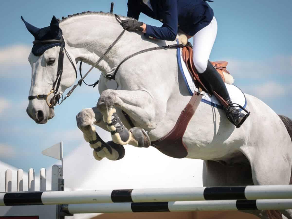 White horse jumping over bars