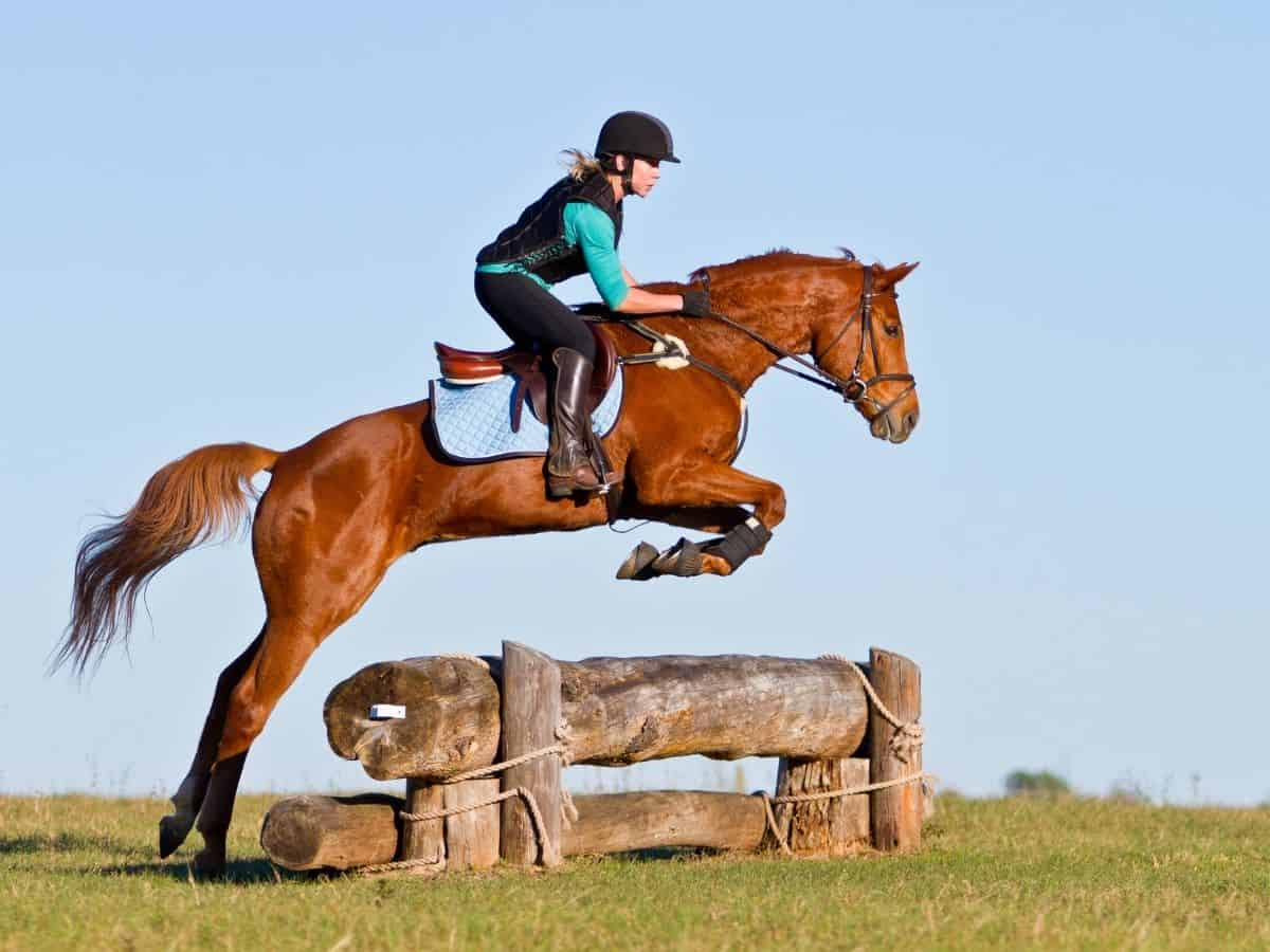 Horse jumping over railroad ties