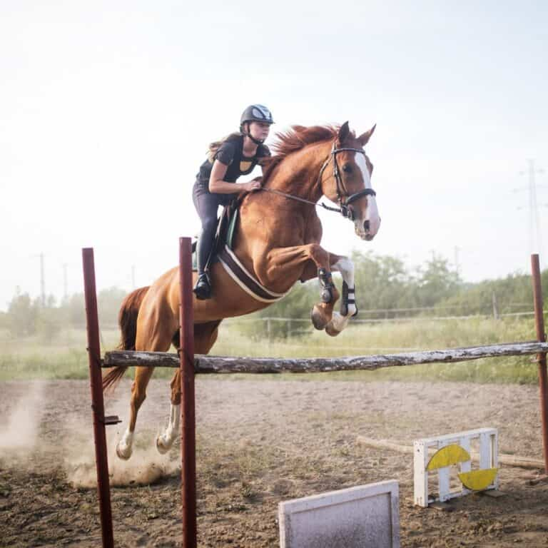 Horse jumping over rail in dirt