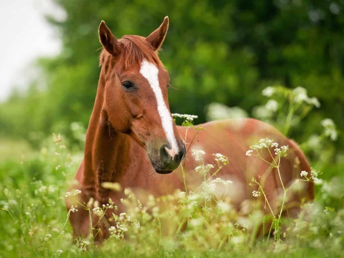 Brown horse with white marking in field