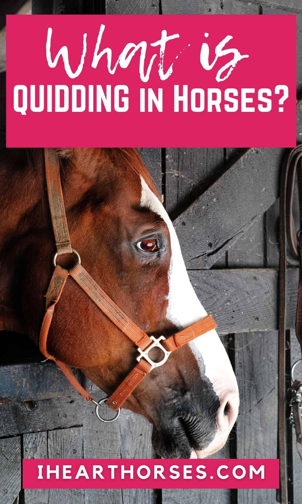 Horse in halter at barn stall