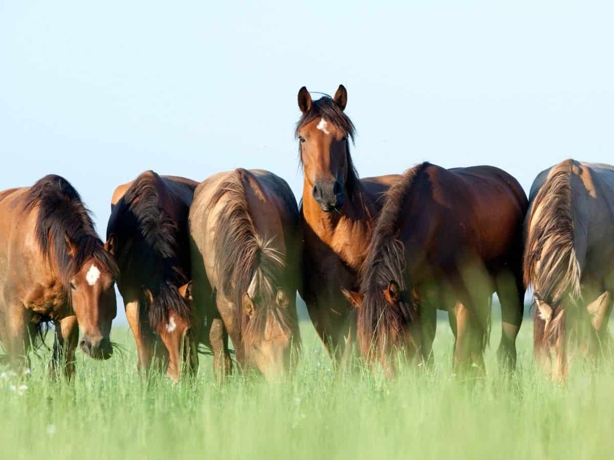 Horses in field of grass