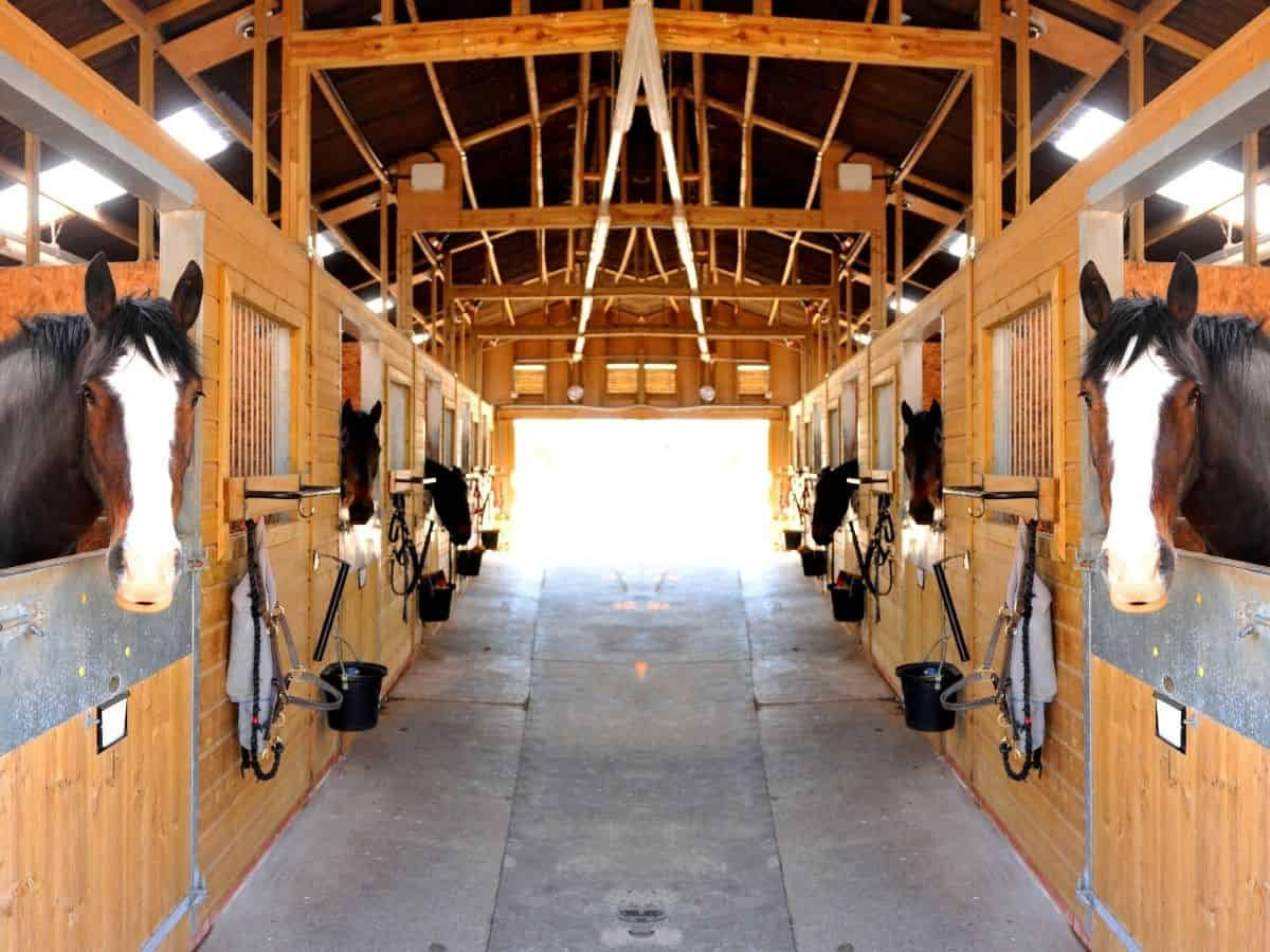 Horeses in a barn