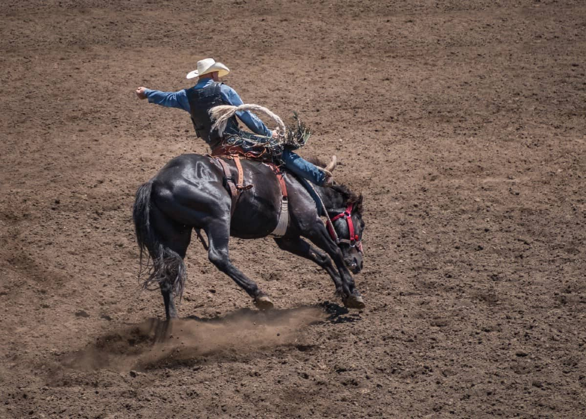 Man on horse in rodeo