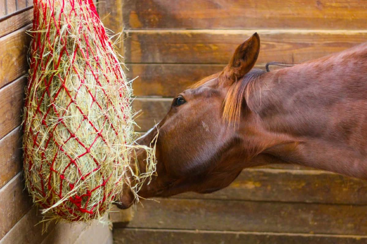 Horse eating hay from red hay bag