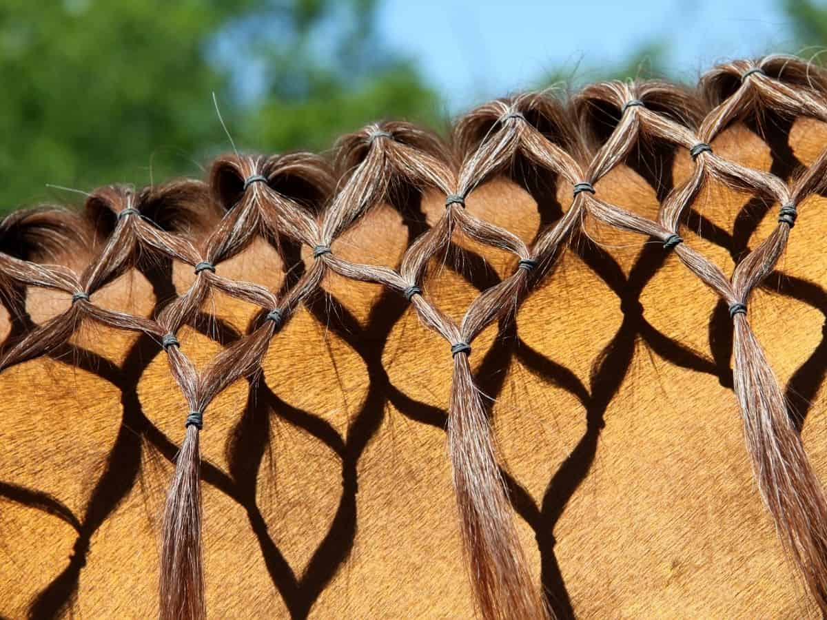 Braided mane on brown horse