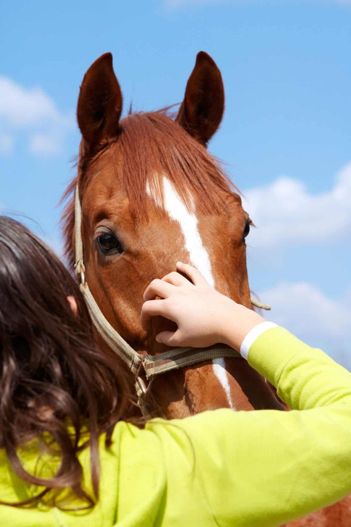 Child in green shirt petting horse nose