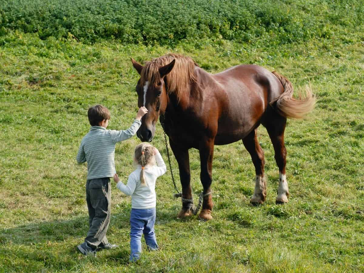 Two children petting horse in field
