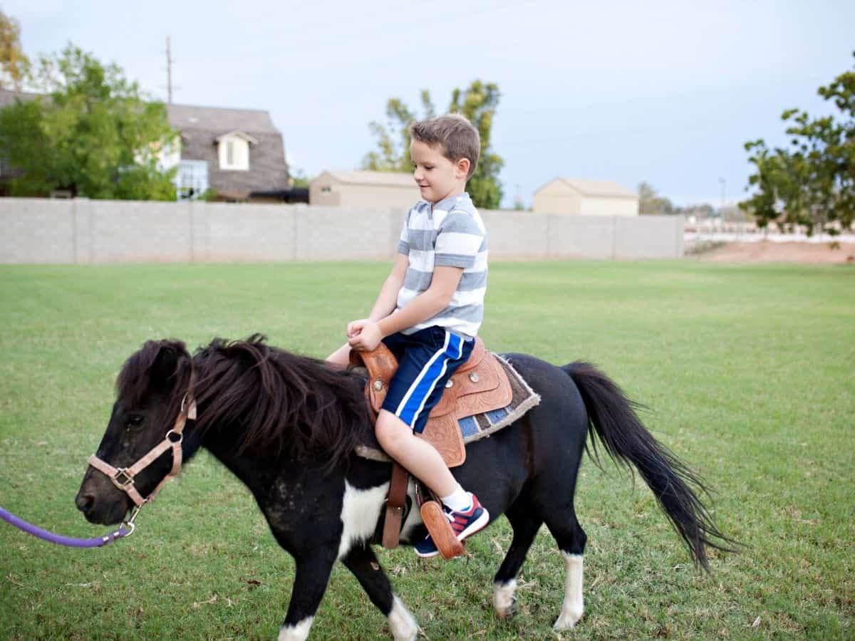 Boy in striped shirt on pony