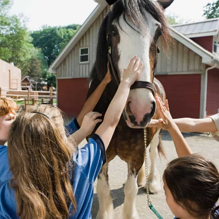 Kids petting a horses nose