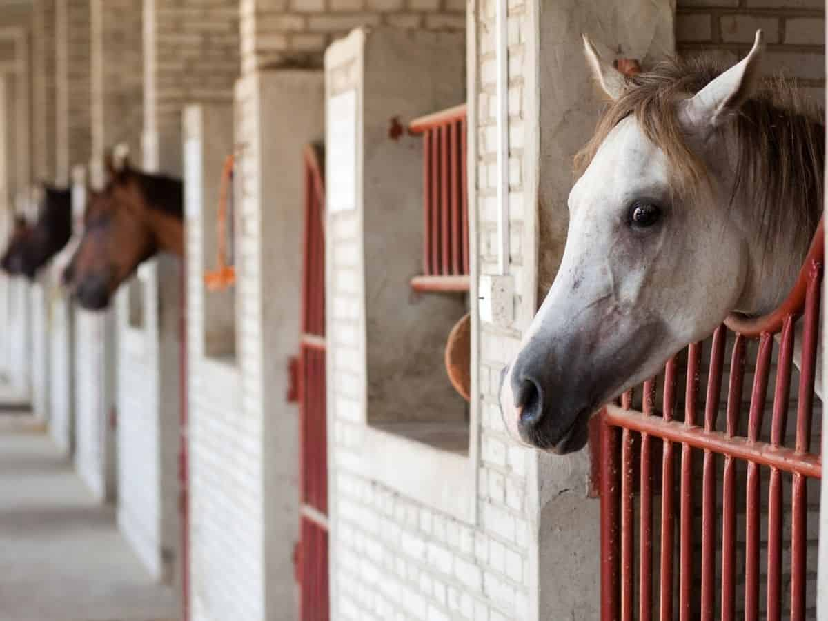 Horse stalls with white brick and red bars