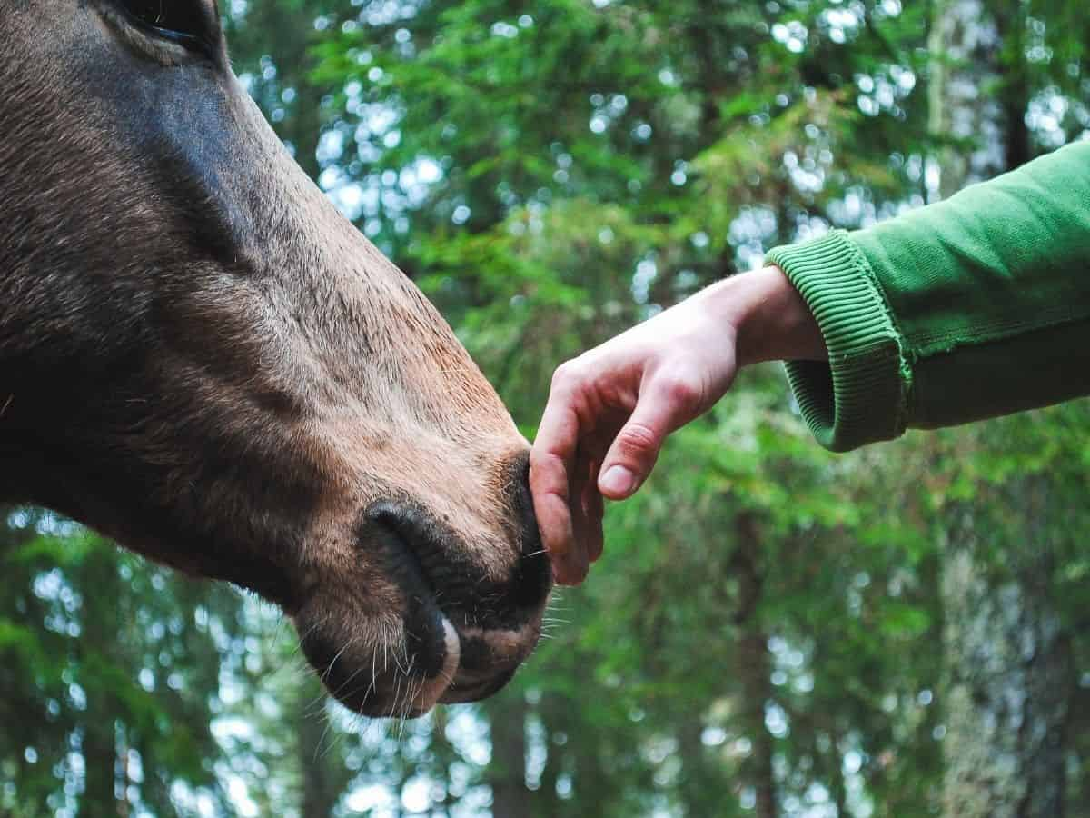 Hand in green sleeve petting nose of brown horse