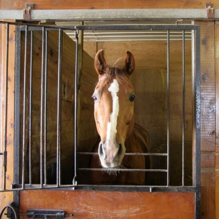 Brown and white horse in stall with bars around opening