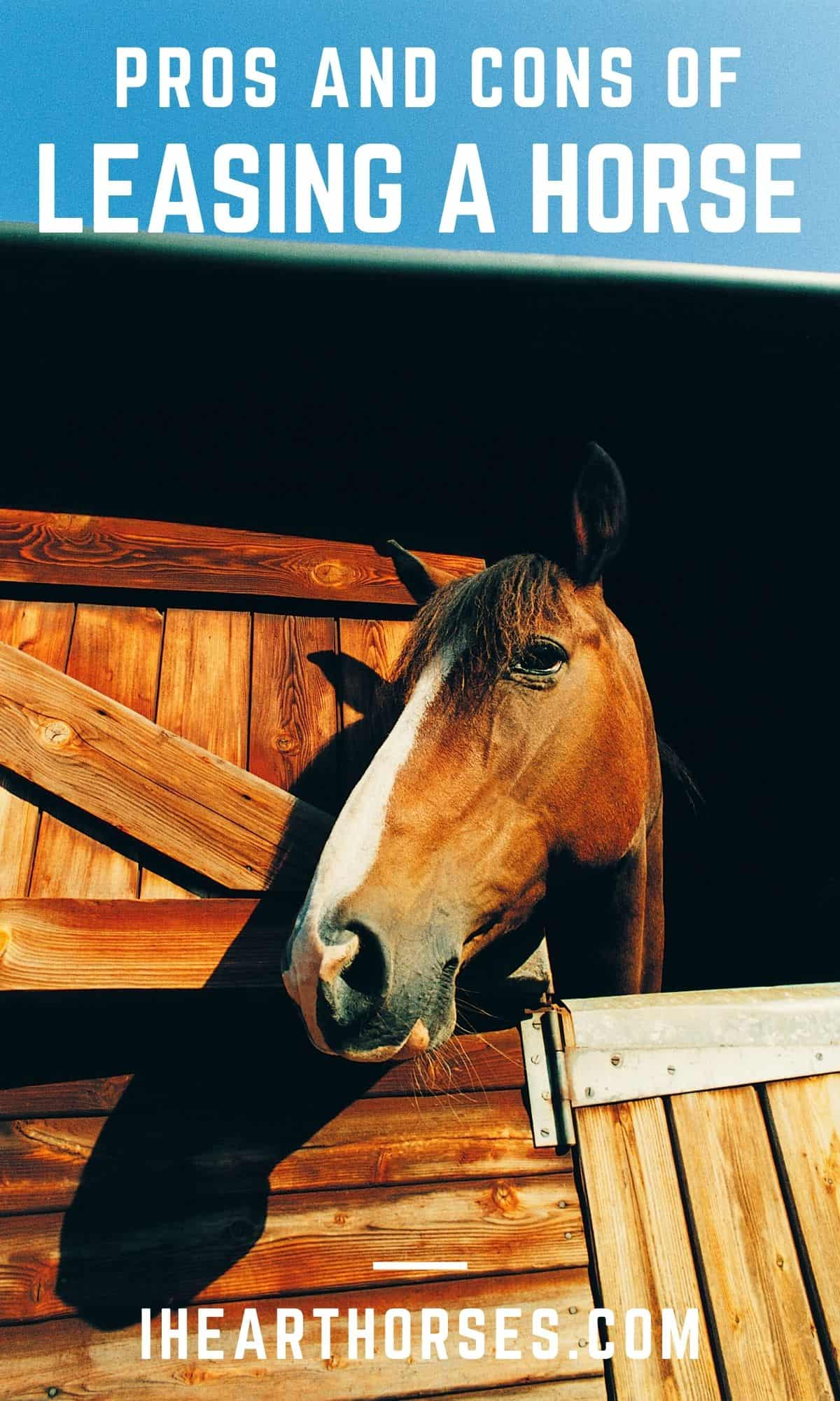 Brown and white horse peering out around wooden barn door