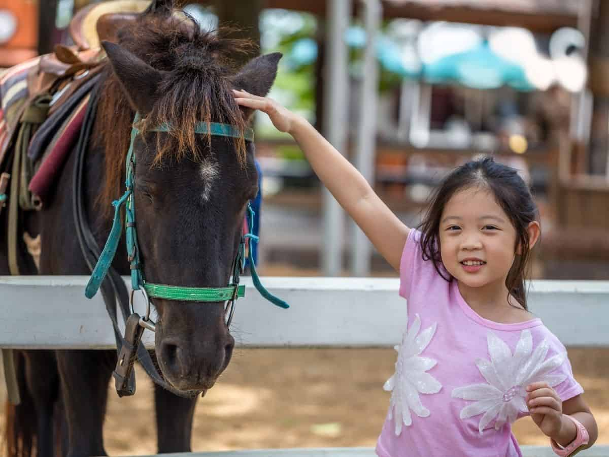 Girl in pink petting brown horse