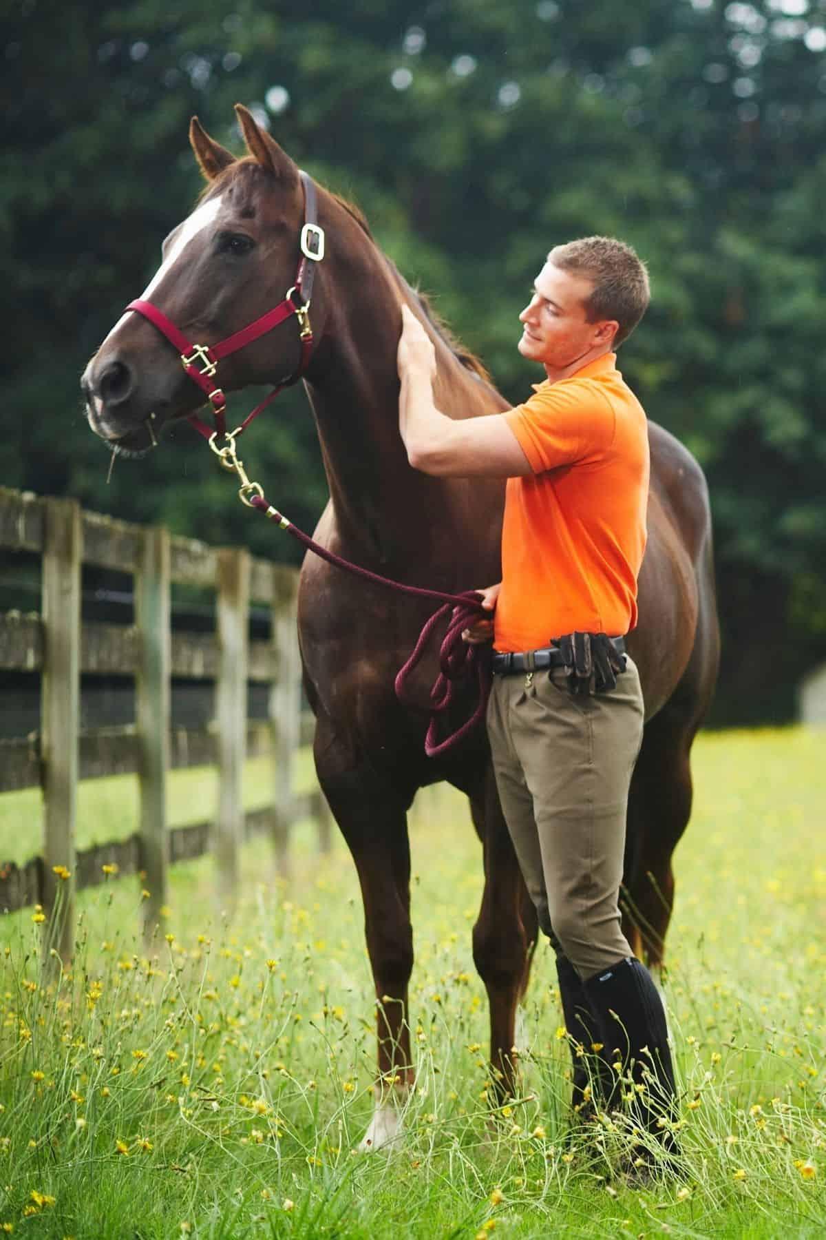 Man in orange grooming horse in field