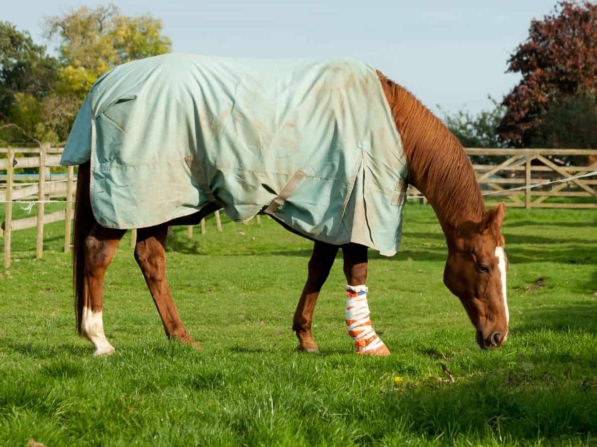 Brown horse in field with light teal blanket