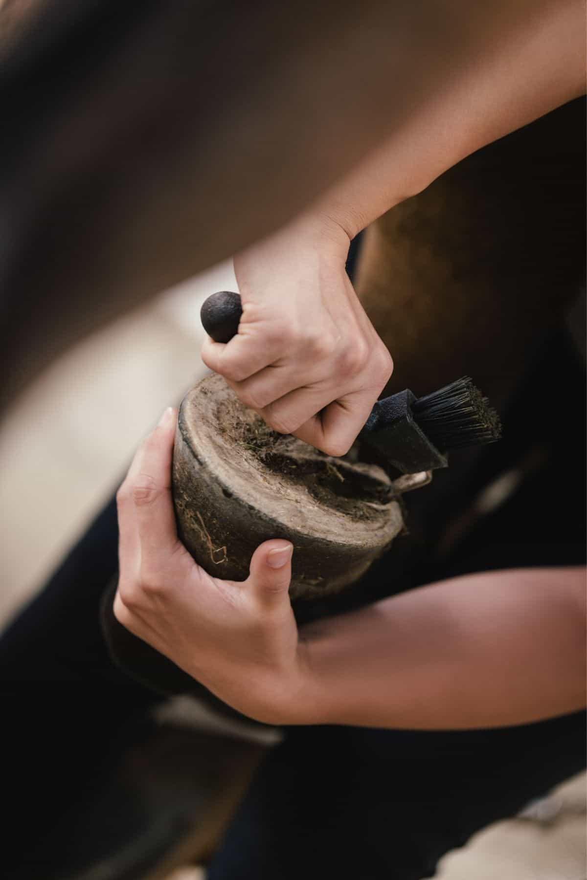 Scraping gunk out of hoof on horse