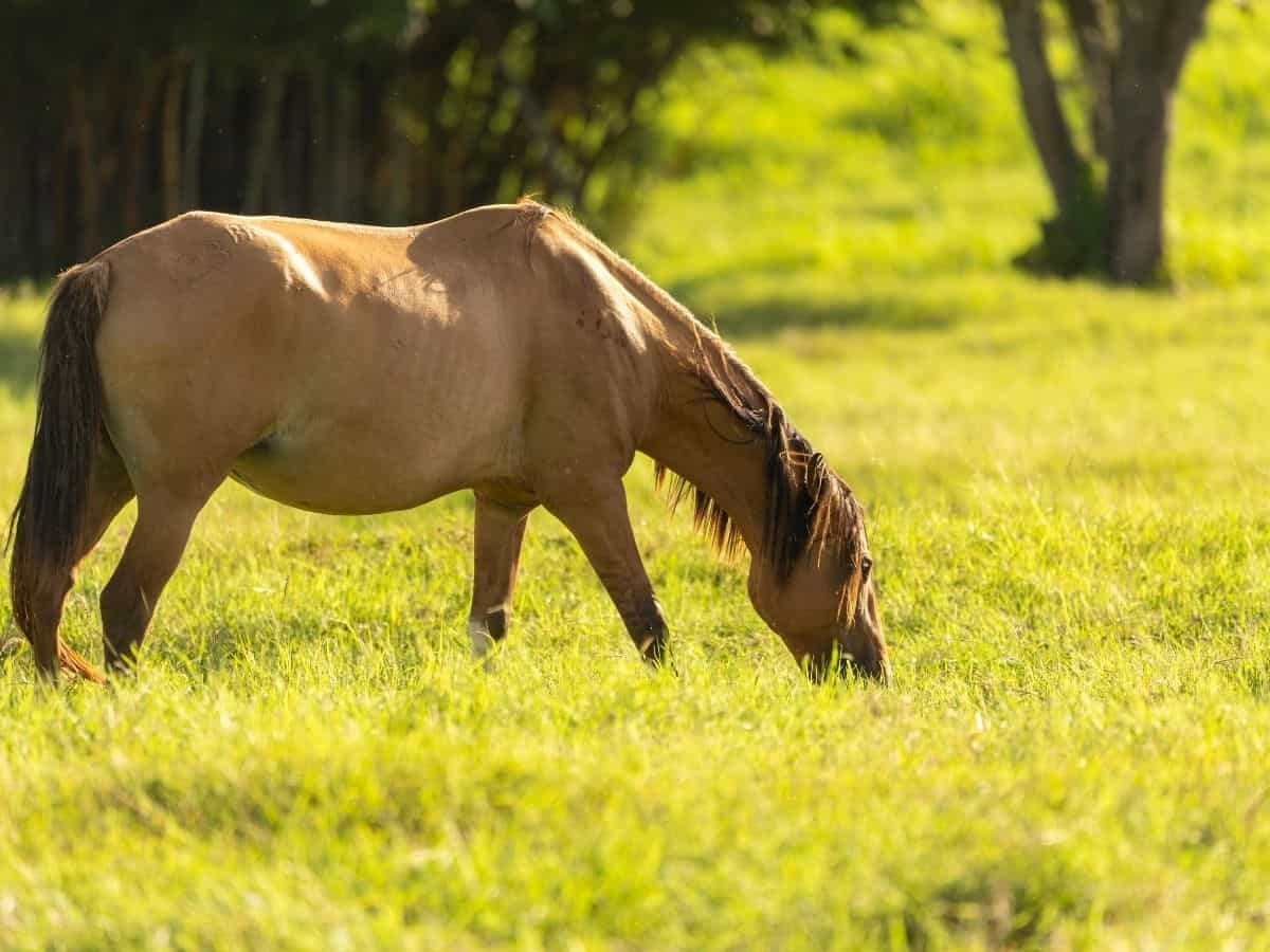 Blonde horse eating next to tree